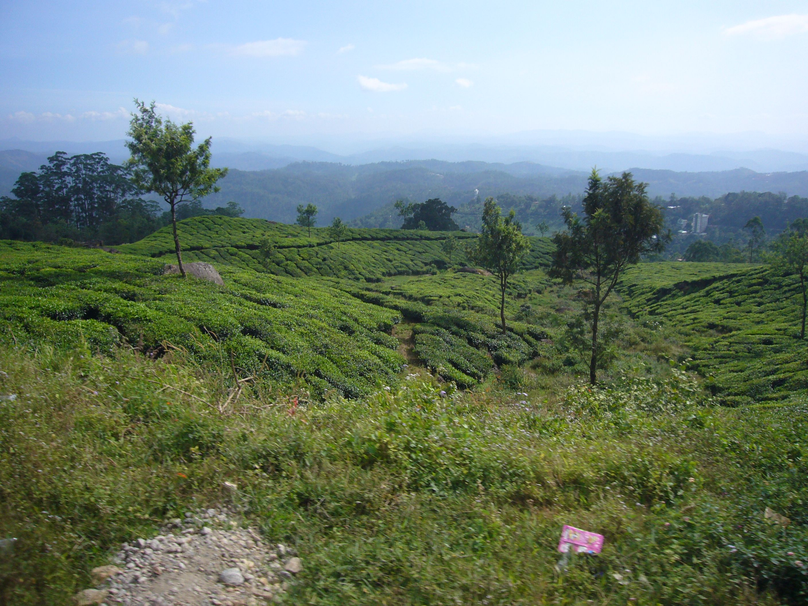 view-bus-munnar-tea