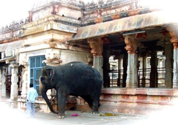 virupaskha-elephant