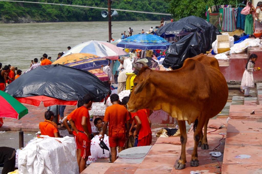 Rishikesh-Ganga-Ghats-Kuh