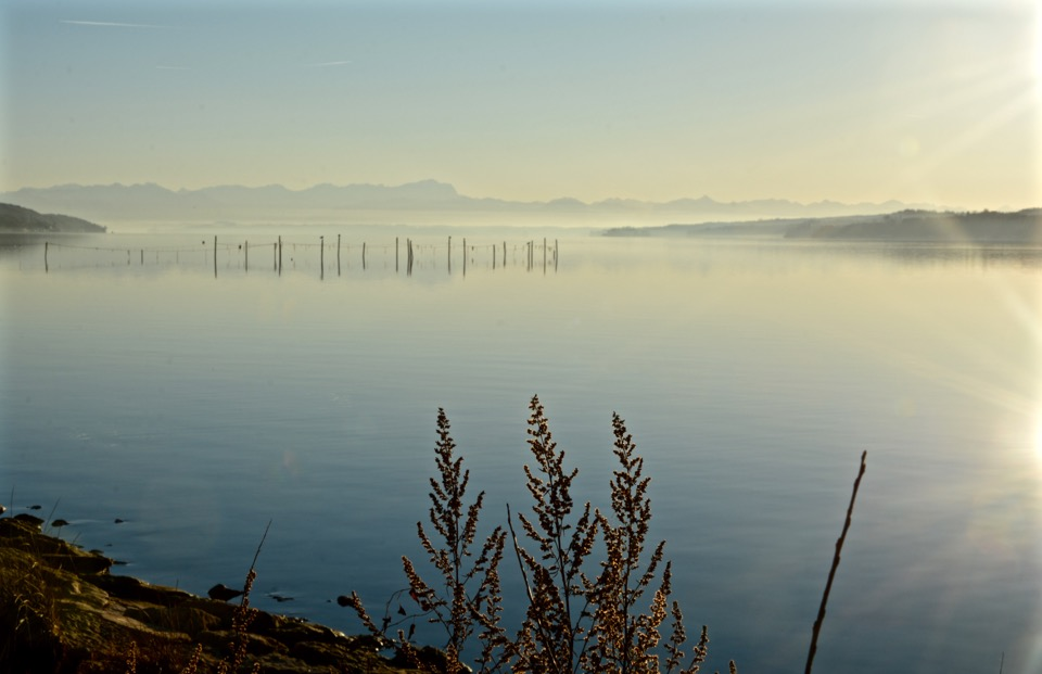Starnberger See Percha