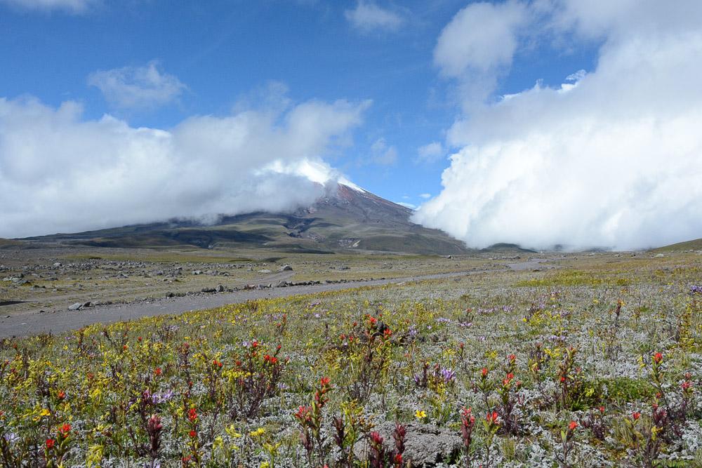 Traveling the World Ecuador Anden Cotopaxi Nationalpark