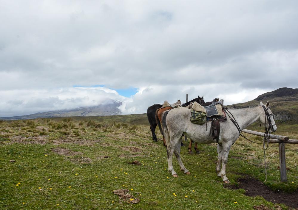 Traveling the World Ecuador Anden Cotopaxi Nationalpark Hacienda El Porvenir Horse Riding